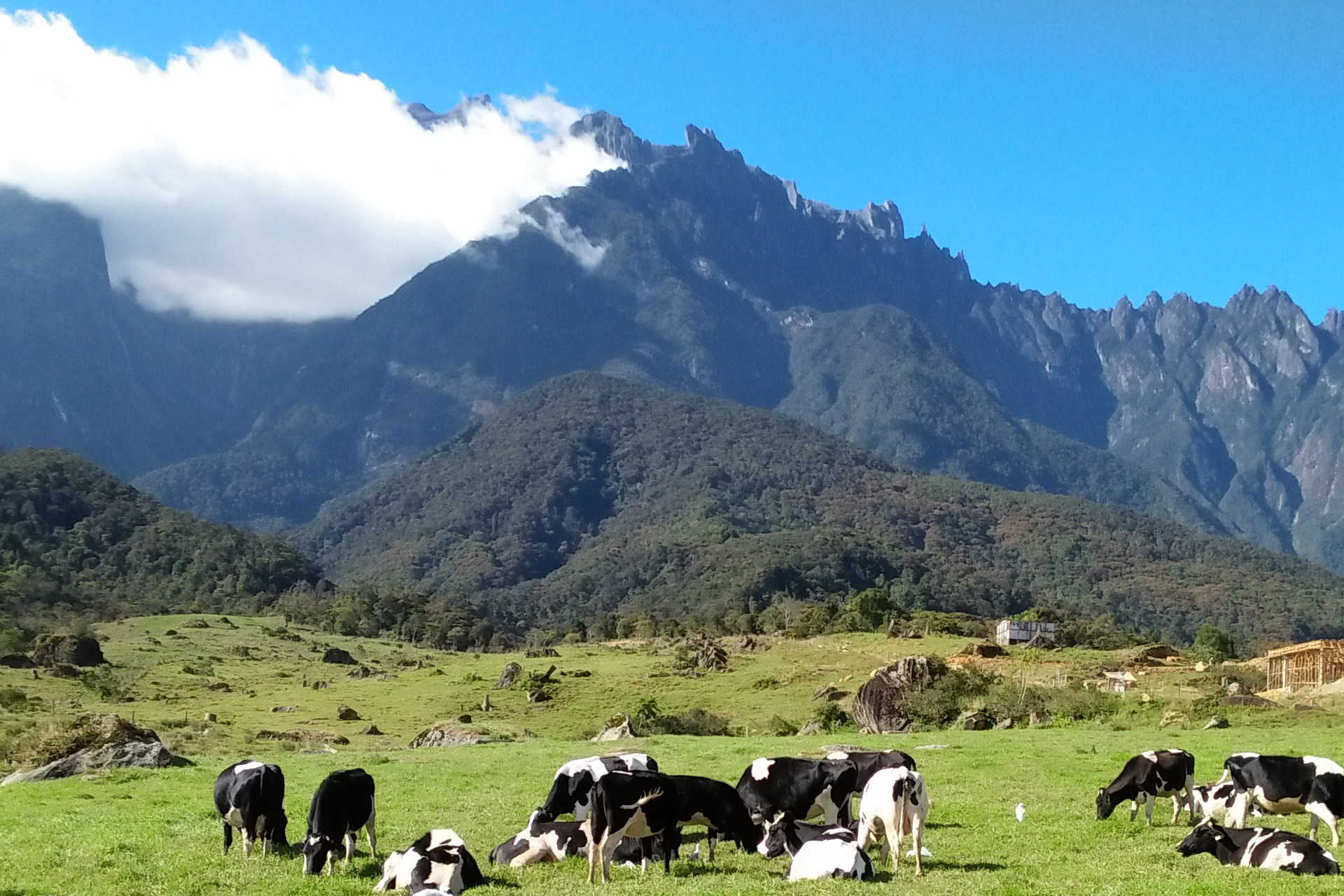 Mount Kinabalu from Desa Cattle Dairy Farm